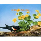 Red-winged Blackbird  - #IOR146  -  PRINT