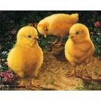 Baby Chicks  - #IOR147  -  PRINT