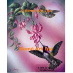 Costa's Hummingbird  - IOR156  -  PRINT