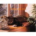 Kitten by Window  - #IOR157  -  PRINT