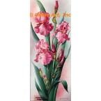 Mauve/Pink Iris  - IOR166  -  PRINT