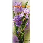 Purple Iris  - IOR167  -  PRINT