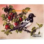 Magpie With Apples  - #IOR227  -  PRINT