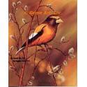Evening Grosbeak  - #IOR28  -  PRINT