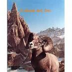 Big Horn Mt. Sheep  - #IOR33  -  PRINT