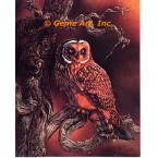 Short Earred Owl  - #IOR34  -  PRINT