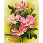 Canadian Rose  - #IOR38  -  PRINT