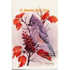 Tufted Titmouse  - #IOR42  -  PRINT