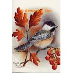 Chickadee  - IOR49  -  PRINT