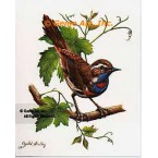 Blue Throat  - #IOR62  -  PRINT