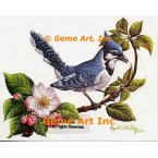 Blue Jay  - IOR65  -  PRINT