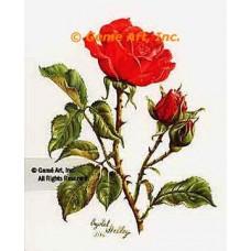 Scarlet O'Hara Rose  - #IOR67  -  PRINT
