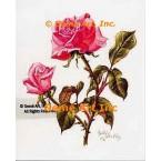 Pink Ballerina Rose  - IOR68  -  PRINT