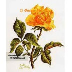 Yellow Sunshine Rose  - #IOR69  -  PRINT