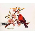 Scarlet Tanager  - #IOR70  -  PRINT