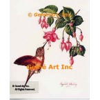 Hummingbird with Fuchsia  - #IOR71  -  PRINT
