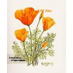California Poppies  - #IOR73  -  PRINT