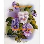 White, Purple, & Lavender Pansies  - #IOR79  -  PRINT