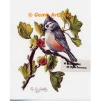 Tufted Titmouse  - #IOR93  -  PRINT
