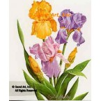 Yellow, Lavender, and Purple Iris  - IOR95  -  PRINT