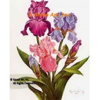 Pink, Lavender, and Purple Iris  - IOR96  -  PRINT