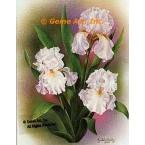 White Iris  - IOR99  -  PRINT