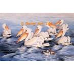 Pelicans  - #UOR13  -  PRINT