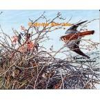 American Kestrel & Sparrows  - #UOR14  -  PRINT