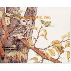 Saw Whet Owl  - #UOR6  -  PRINT