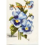 Blue Pansies  - #TOR952  -  PRINT