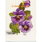 Purple Pansies  - #TOR955  -  PRINT