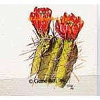 Red Flower Cactus  - TOR28  -  PRINT