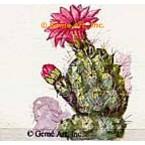 Pink Flower Cactus  - TOR29  -  PRINT