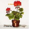 Geraniums  - #TOR37  -  PRINT
