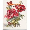"""1. Roses  - TOR449  -  FIVE PRINT 8x10"""""""