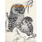 Owls  - #TOR792  -  PRINT