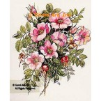 Canadian Rose  - #TOR5023  -  PRINT