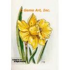 Yellow Daffodil  - #TOR5105  -  PRINT
