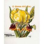 Yellow Iris  - TOR5179  -  PRINT