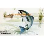 Silver Salmon  - #TOR5191  -  PRINT