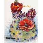 Flower Cactus  - #TOR5214  -  PRINT