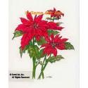 Poinsettia  - #TOR5243  -  PRINT