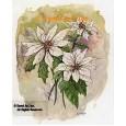 Poinsettia  - #TOR5271  -  PRINT