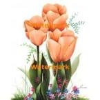 Tulips  - #XM414  -  PRINT