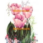 Tulips  - #XM415  -  PRINT