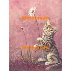 Kitten & Daisy  - #XBAN356  -  PRINT
