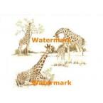 Giraffes  -  #XBAN449  -  PRINT