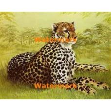 Leopard  - XBAN459  -  PRINT