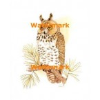 Owl  - XBAN469  -  PRINT