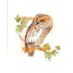 Owl  - XBAN470  -  PRINT